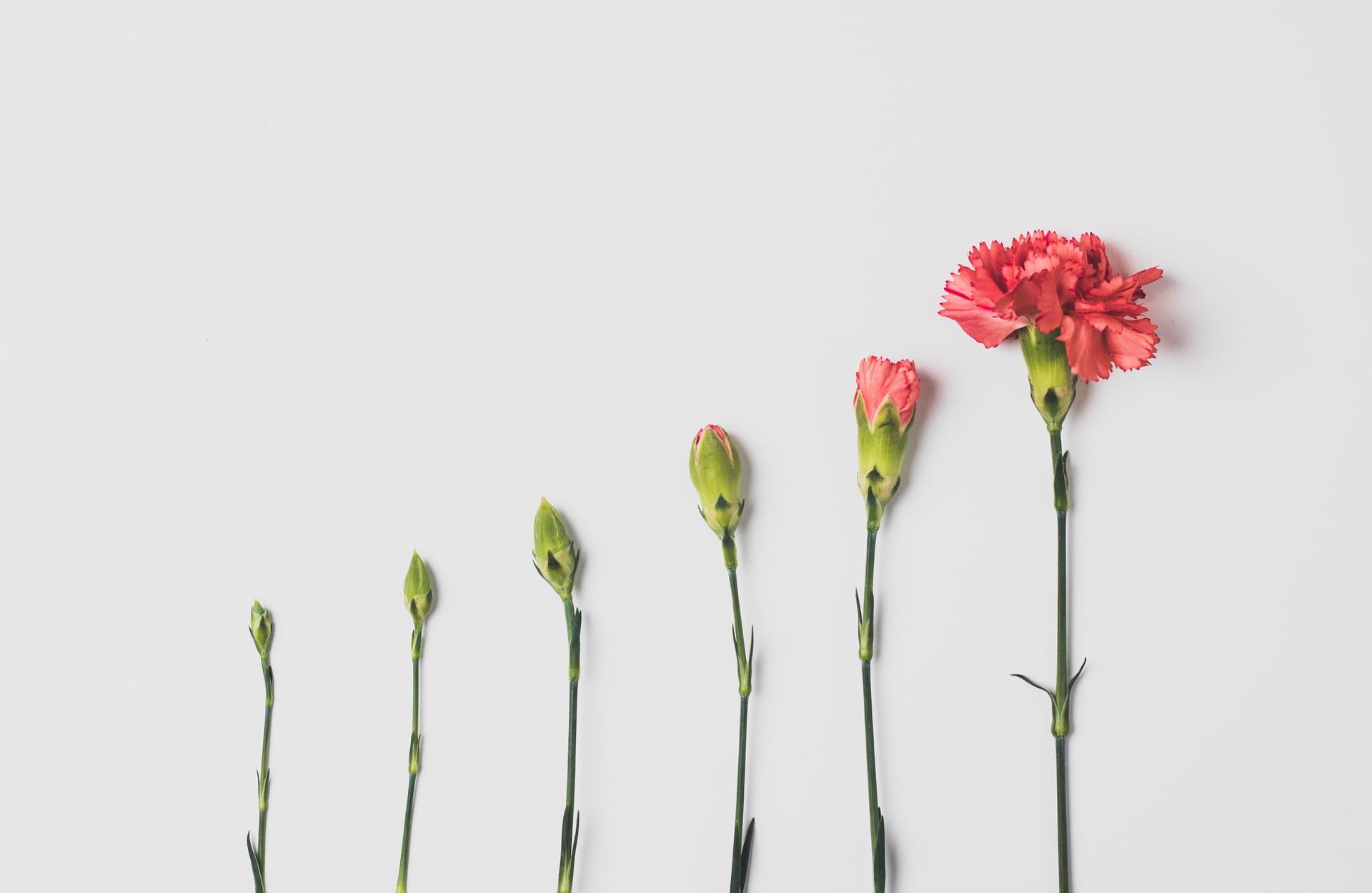 flowers illustrating growth